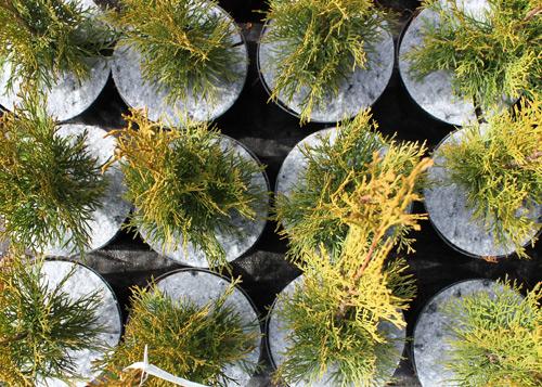 Krążki filcowe do doniczek tj. dyski, krążki doniczkowe z włókniny przeciw chwastom, do stosowania w szkółkarstwie i ogrodnictwie